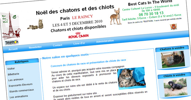 best-cats-in-world